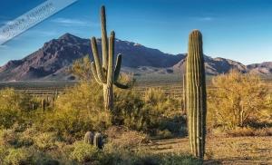 3.Tag Imperial, Saguaro 027