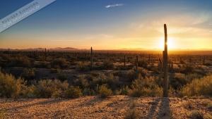 3.Tag Imperial, Saguaro 035