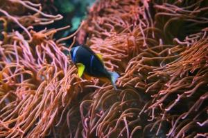 Fische (2)
