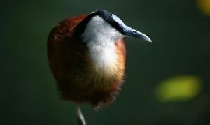 Vögel (1)