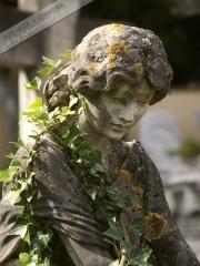 Engel Toscana 3