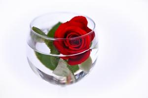 Hochzeit Rose