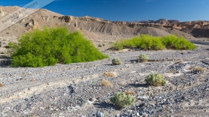 Death Valley (7).jpg