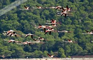 Salinas u. Flamingos  (15)