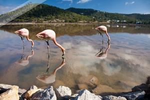 Salinas u. Flamingos  (25)