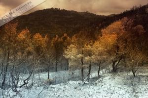 Waldbrand (1)