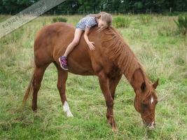 bei den Pferden (2)